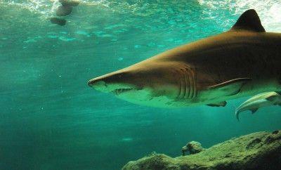 SharkAttacks