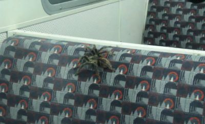 GRABS Spider on the tube. London Tube passengers flee in panic when man lets a TARANTULA loose